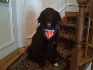 Super Dog May 8, 2015