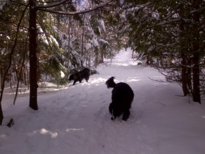 Rothesay Allison trails Jan 17, 2016