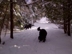 Rothesay Allison trails Jan 17, 2016