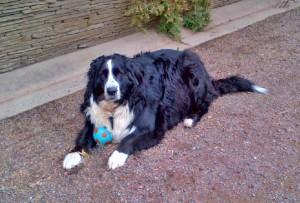 Buddy's new ball 2 May 4, 2016