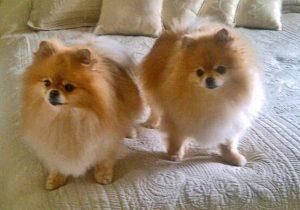 Lucus & Myra, 7th birthday cropped_edited-1