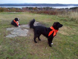 buddy-hunter-orange