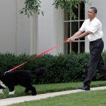 bo-on-leash